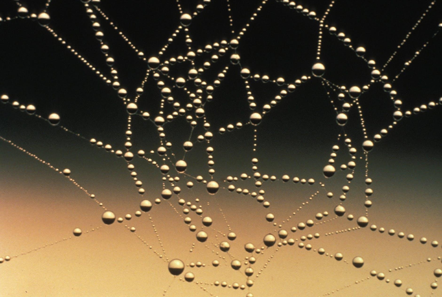 abstract close up cobweb connection